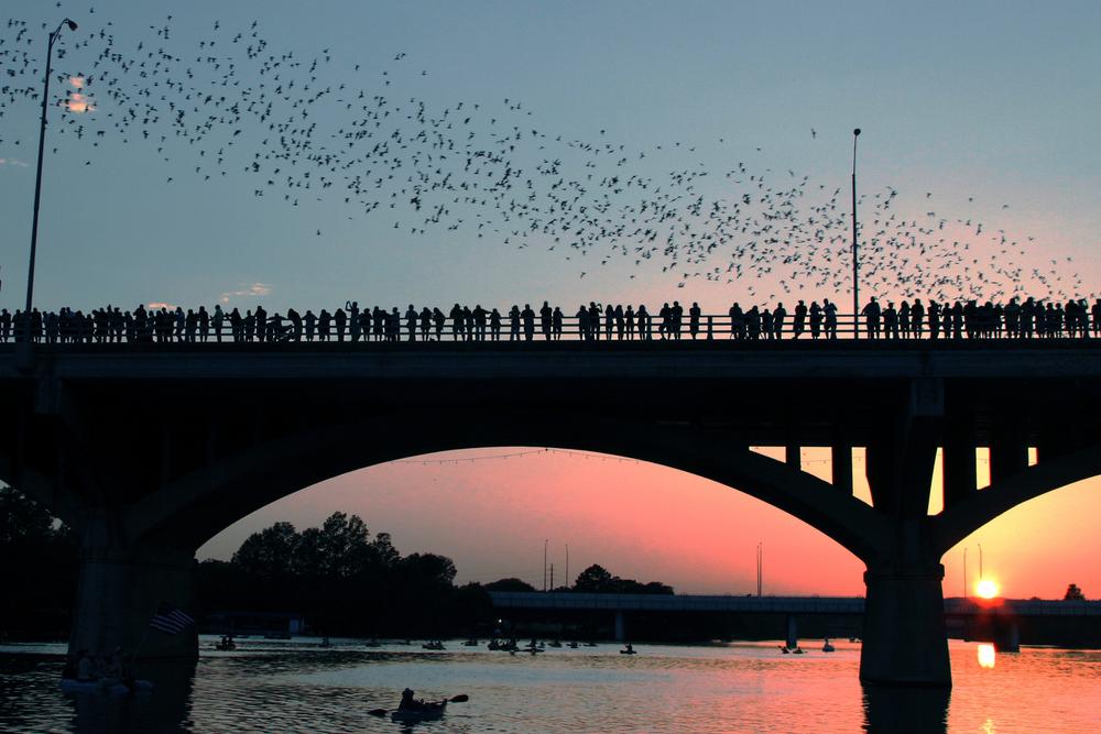 11th-Annual-Austin-Bat-Fest-Event.jpg