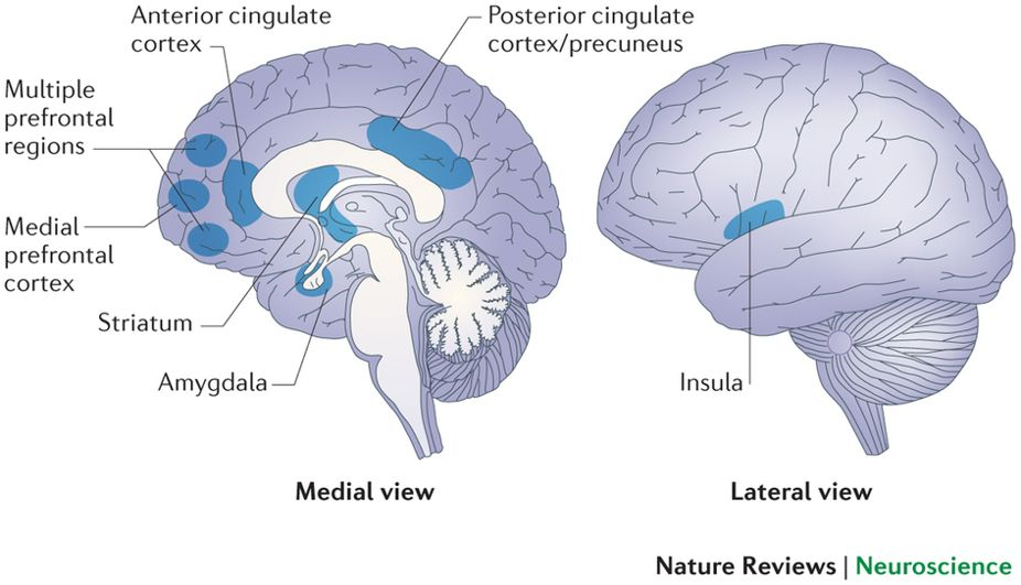 """Illustration of brain regions which are potential targets of Resilience Oriented Strategies. The  anterior cingulate cortex  is associated with pain and negative emotions. It encodes affective information preferentially over sensory information. The  prefrontal cortex is considered the main driver in blocking responses to painful stimuli while the  striatum  and  amygdala play significant roles in learning and predicting aversive stimuli. The insula  and  posterior cingulate cortex/precuneus are involved in processing self referential information."""""""