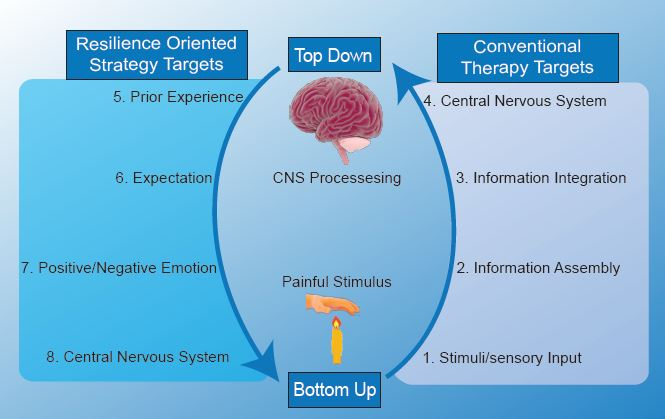 """A painful experience can be considered an integration of information related to the stimuli itself –nocioception -and to an individual's perception of that stimuli. These are referred to as """"bottom up""""and """"top down""""processing of pain where """"bottom up""""is initiated with sensory input, and """"top down""""begins with prior experience and knowledge associated with that stimulus. The role of negative emotions in """"top down""""processing is well documented in experiencing pain, but research demonstrating mechanisms through which positive affect attenuates pain is an emerging field of study. Resilience Oriented Strategies target """"top down""""processing to modulate attention paid to nocioceptive stimuli and to reduce perceived severity of the experience. Image credit:  Alex Sercel  with images licensed under  CC BY-NC-SA 4.0 ."""