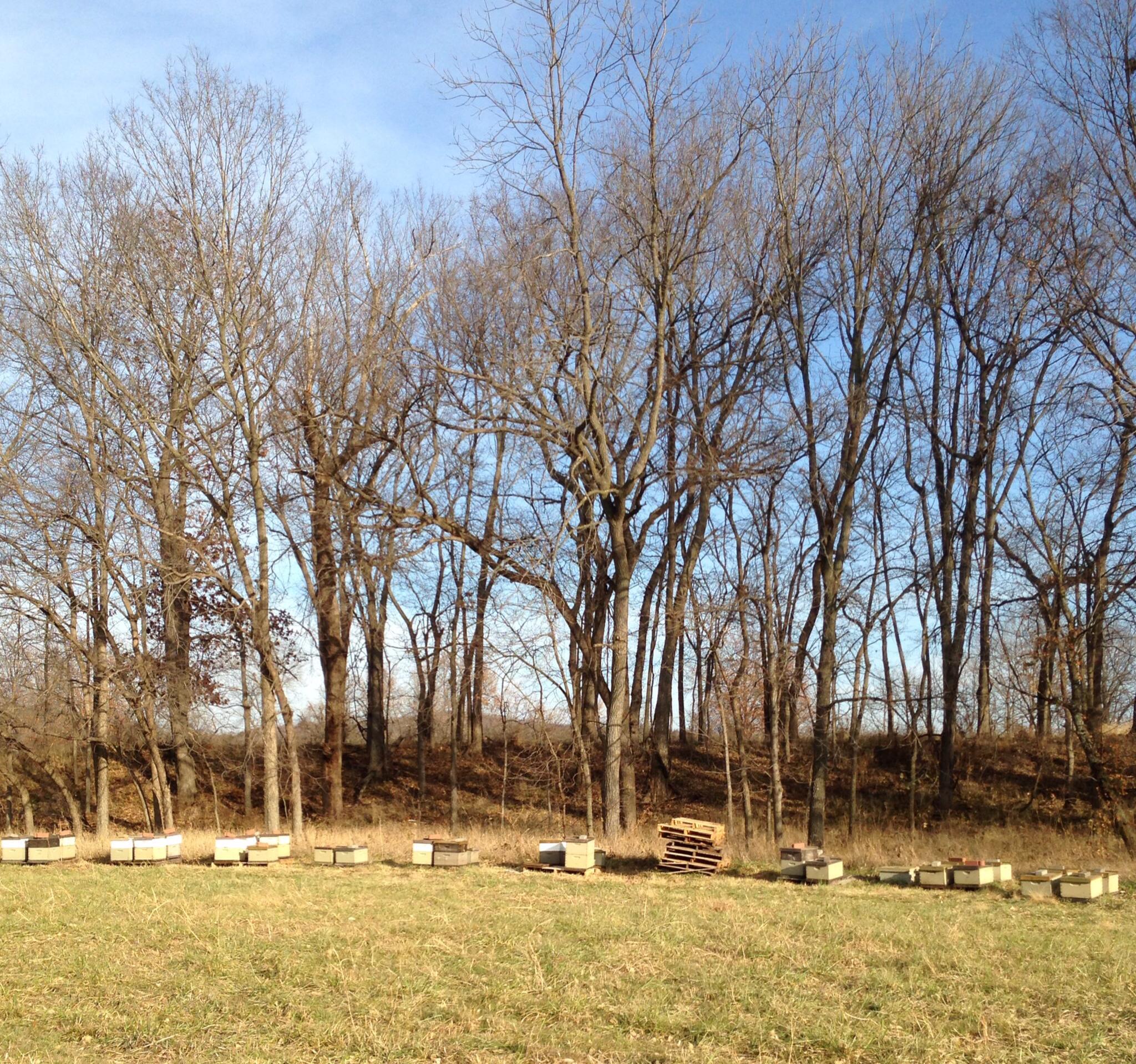 The biggest herd
