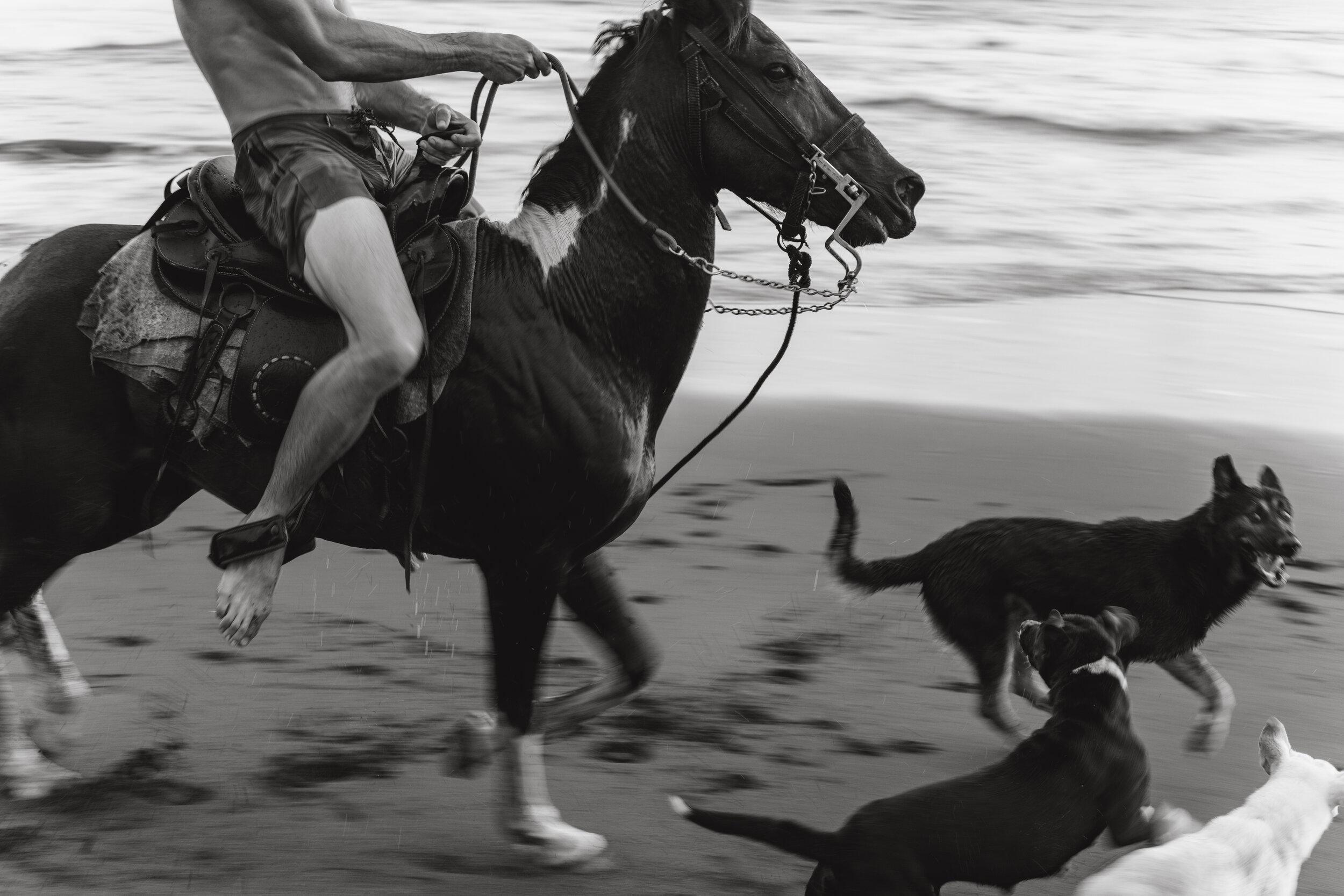 mizata-horse-3.jpg