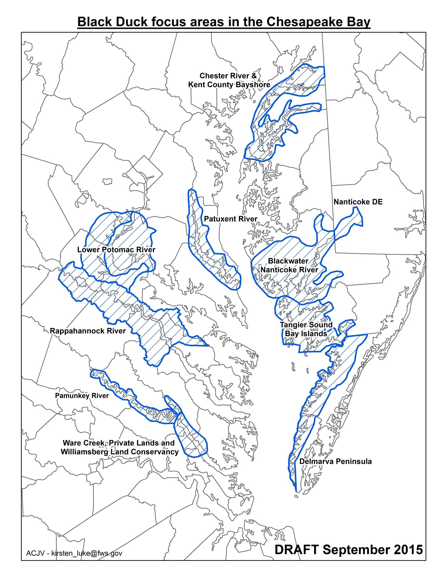 Prime Chesapeake black duck habitat
