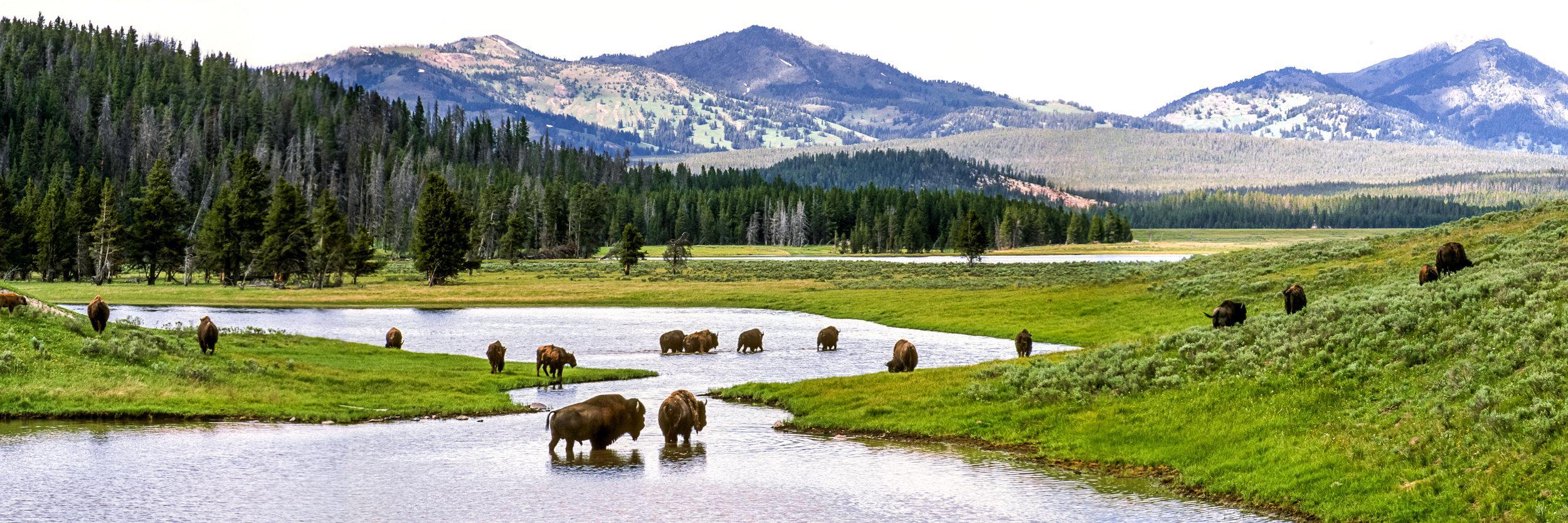 National Park Suite_3.jpg