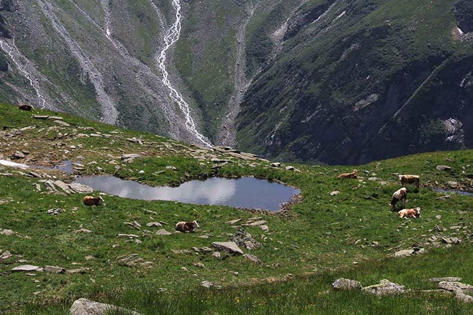 Alpes austríacos. Verano 2015.
