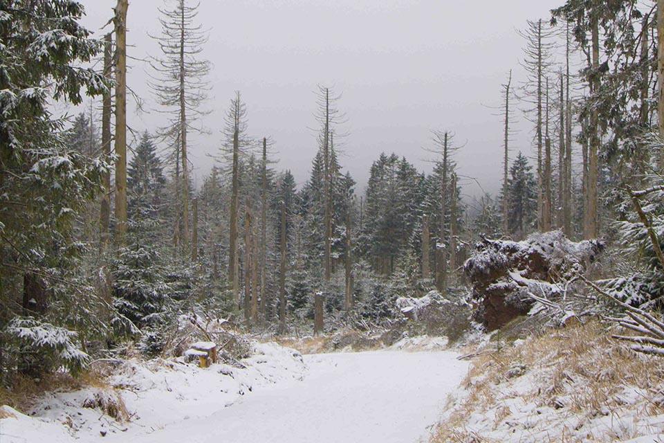 Bosque en Parque Harz, Alemania. Invierno 2017.