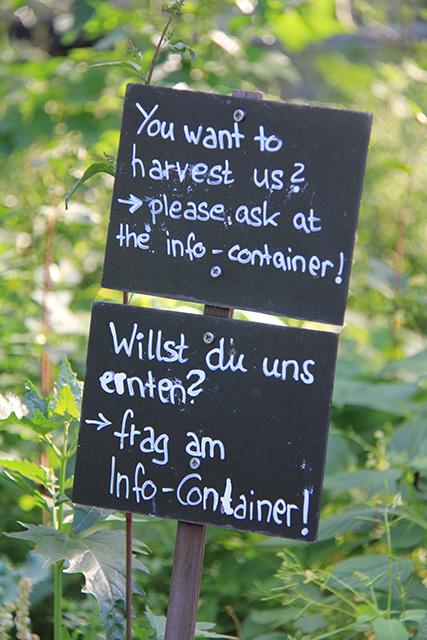 ¿Quieres cosecharnos? Pregunta en el Container de Informaciones.