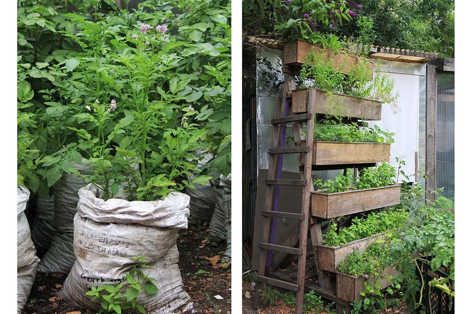 En Prinzessinnengärten todo es cultivable.