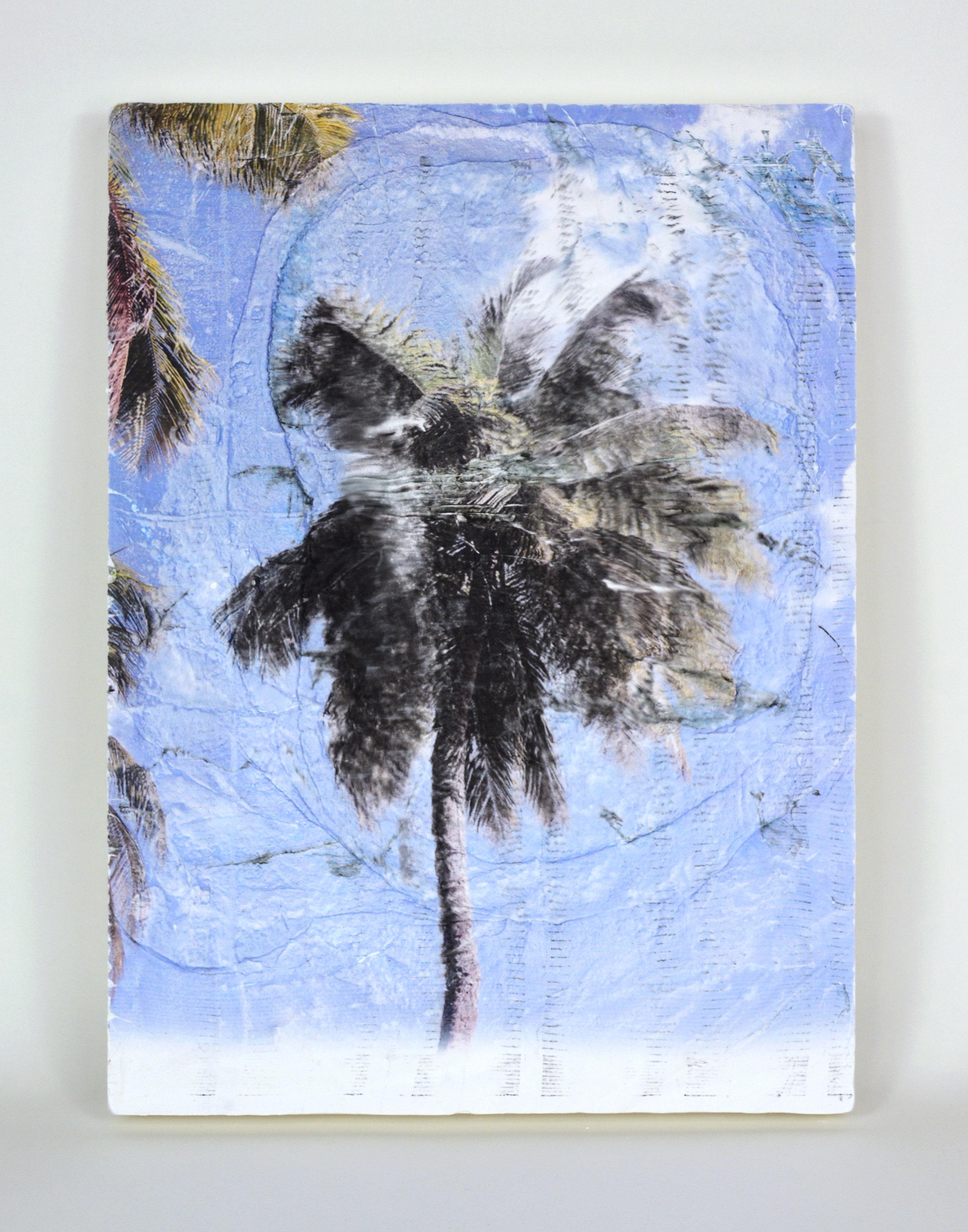 palm fade.jpg