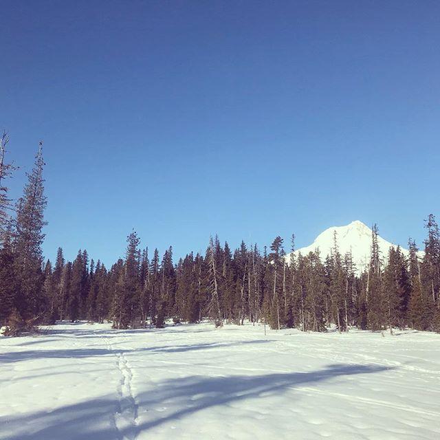 New ski day (finally)! #xcskiing #teacuplakenordic #atomicskis #mthood