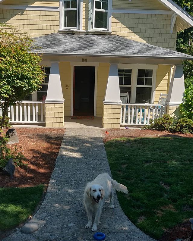 Check out this awesome pup. His name is Nova and we get to paint his family's house. This custom Scott Homes built house is modeled after a 1900's craftsman. However this green built house has all the modern features one could want. This project will be underway soon! Give us a call so we can paint your house too!