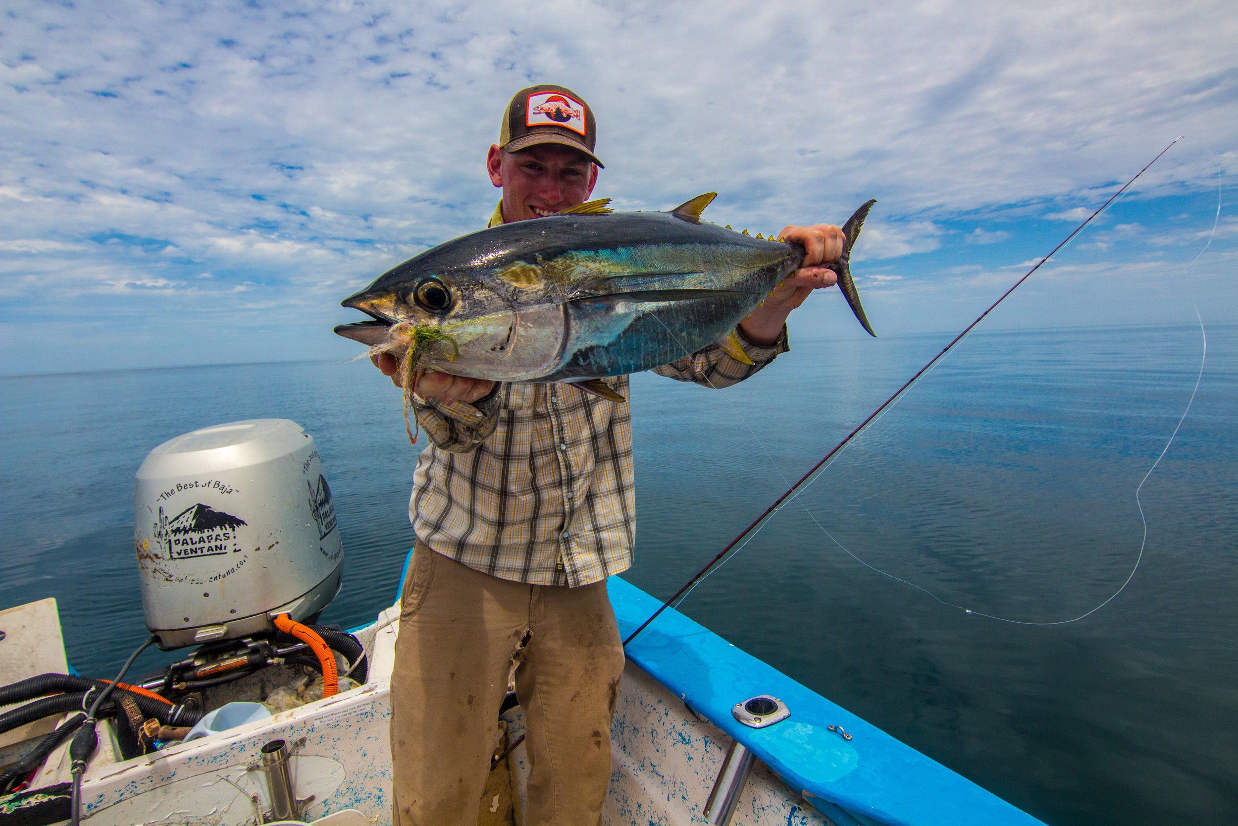 Baja 2017 Yellowfin Tuna