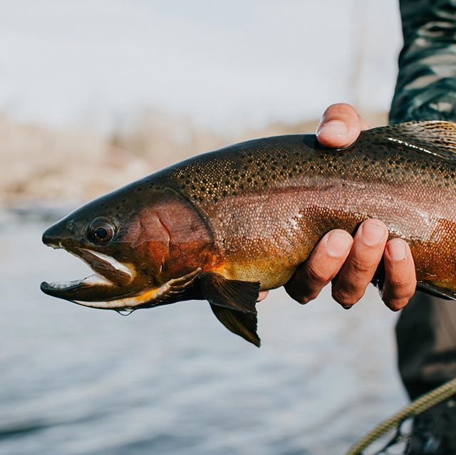 Tomorrow is Customer Appreciation Day at the Lafayette ship, Starts at 9am! Details on the website! Link in bio . 📸 @jakobbur . . #arboranglers #catchandrelease #nature #outdoors #angler #fish #fishinglife #tightlines #flyfish #colorado #trout #rainbowtrout #browntrout #dryfly #nymph #river #troutnation #flylife #troutporn #rivertherapy #patagoniaflyfishing  #troutfishing #flyfishingnation #trout #troutonthefly #flyfishing #flyfishingjunkie #streamer