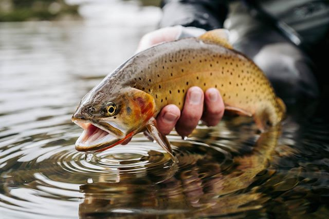 Have questions on Alpine Lake Fishing? Stop by one of our shops and we will get you going in the right direction! 📸 @jakobbur . . . #arboranglers #catchandrelease #nature #outdoors #angler #fish #fishinglife #tightlines #flyfish #colorado #trout #rainbowtrout #browntrout #dryfly #nymph #river #troutnation #flylife #troutporn #rivertherapy #patagoniaflyfishing  #troutfishing #flyfishingnation #trout #troutonthefly #flyfishing #flyfishingjunkie #streamers