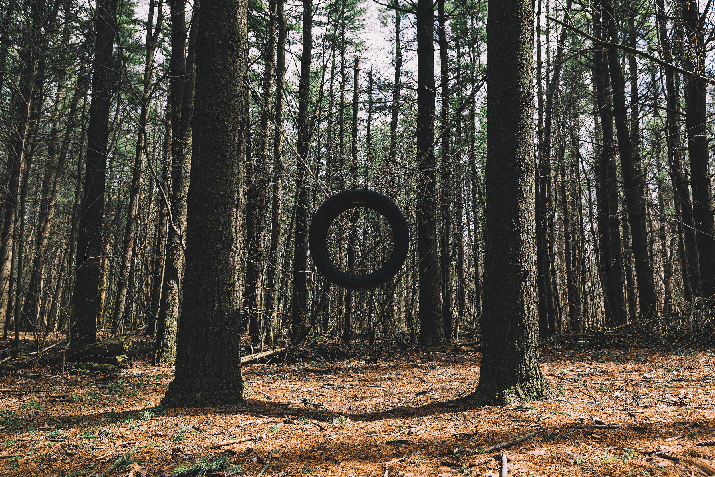 forest set 6.jpg