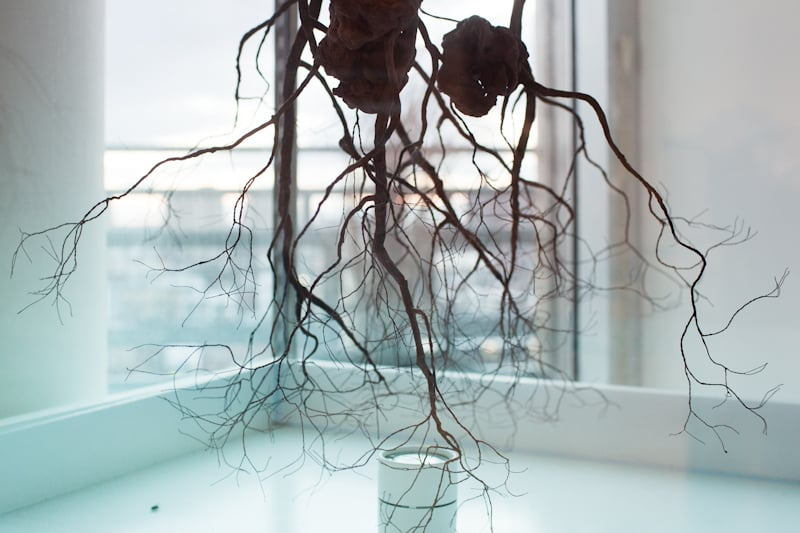 GASHADOKURO.A giant skeleton spirit of the unburied dead