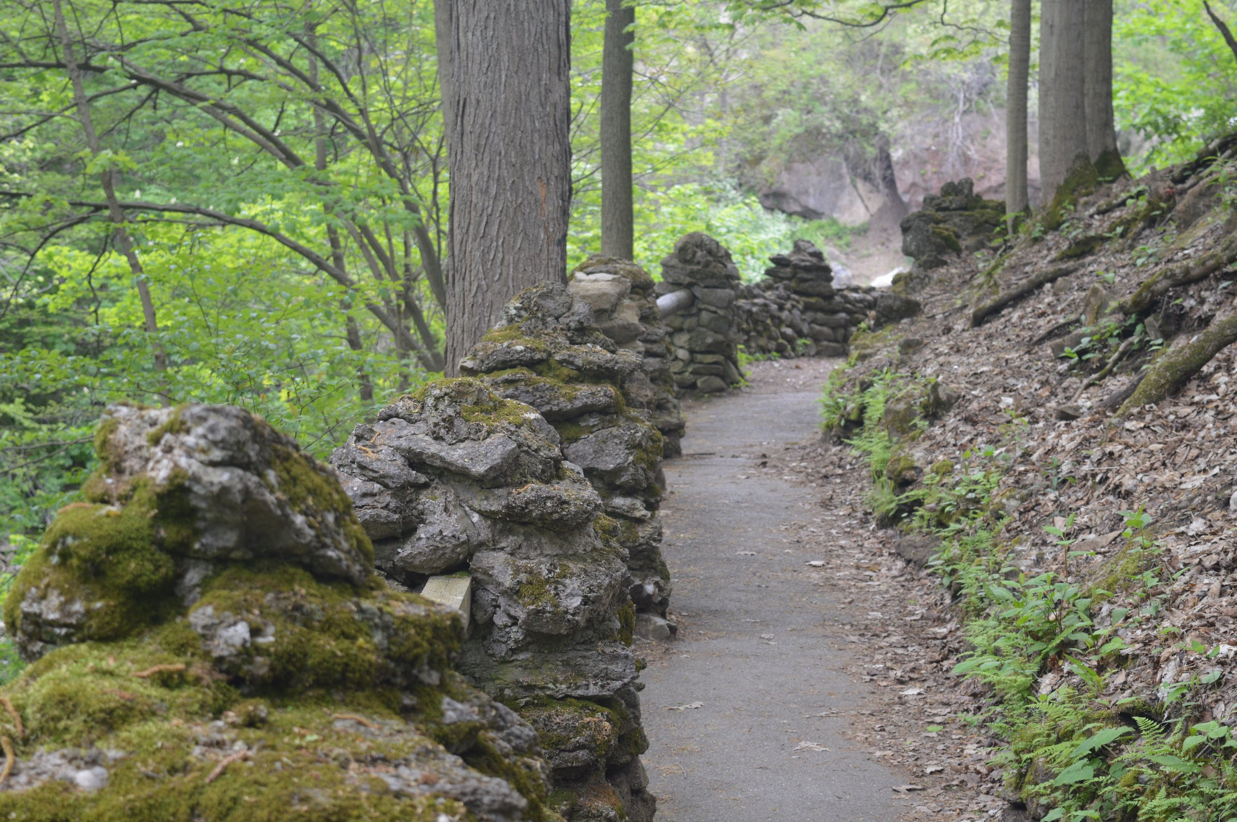 path in the woods - Akron Falls Park, Akron, NY