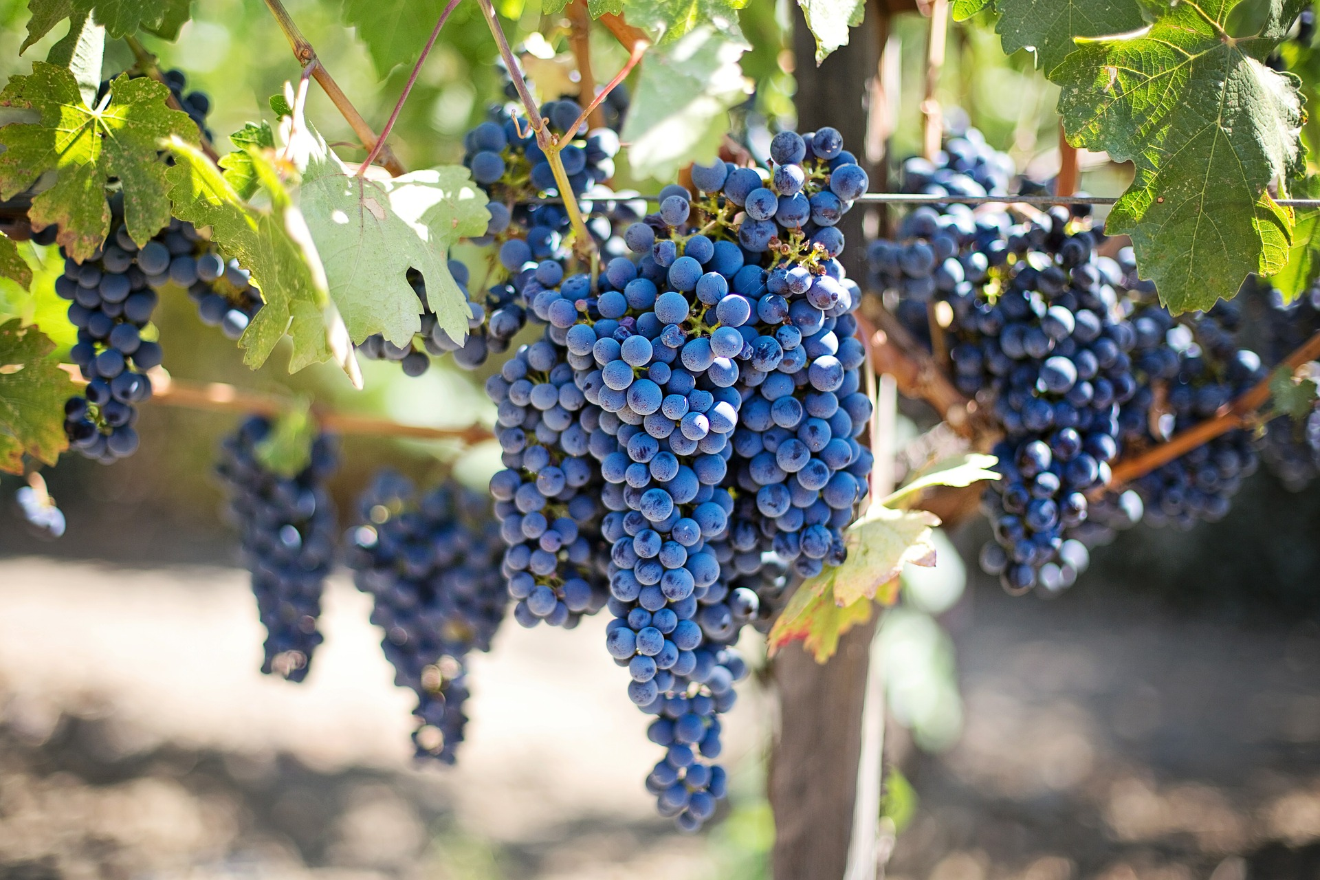 Pixabay - grapes