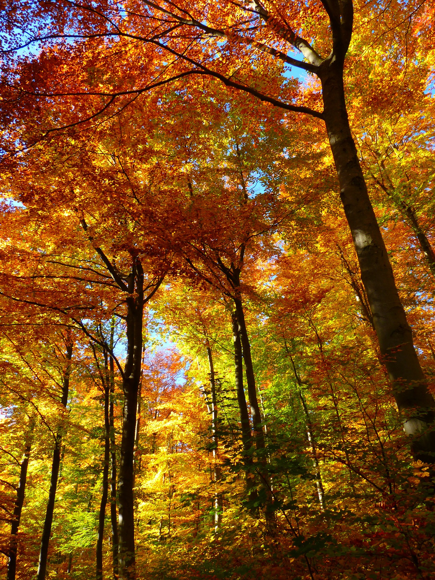 Pixabay - autumn trees