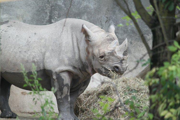 Ever Insult a Rhino?