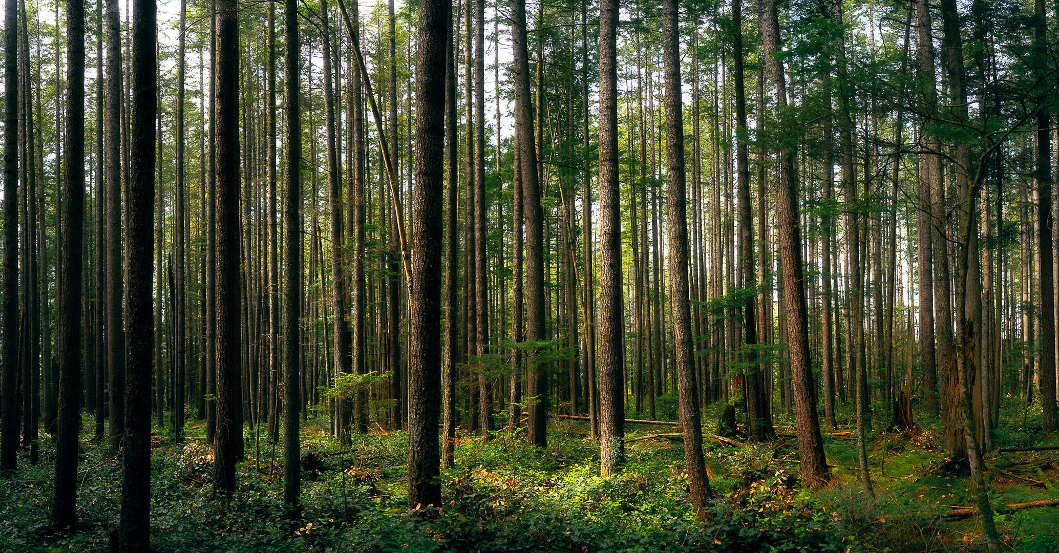 Sea of Trees.jpg