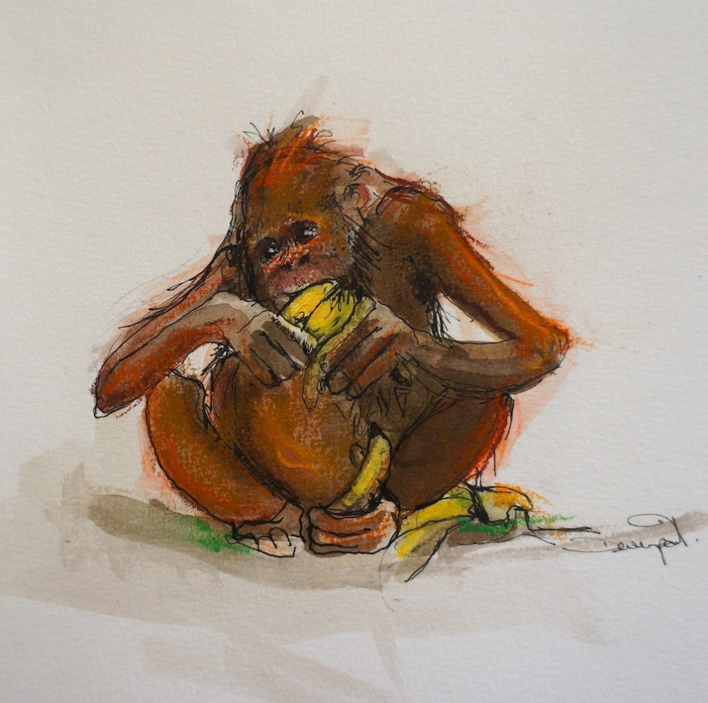 How many bananas can a great ape eat?
