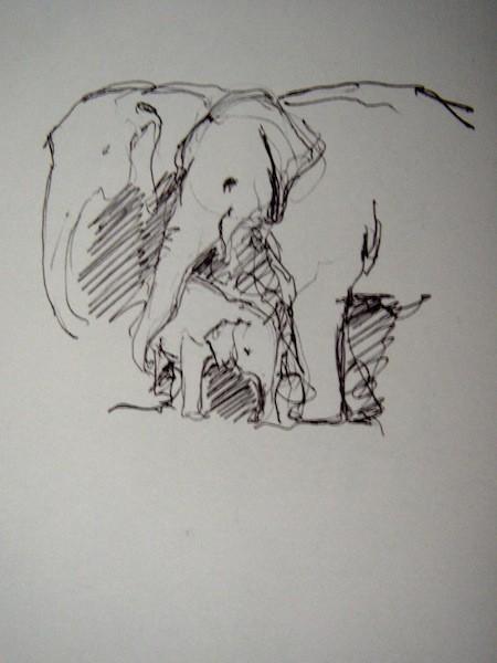 Elephants, Madikwe, S.A.