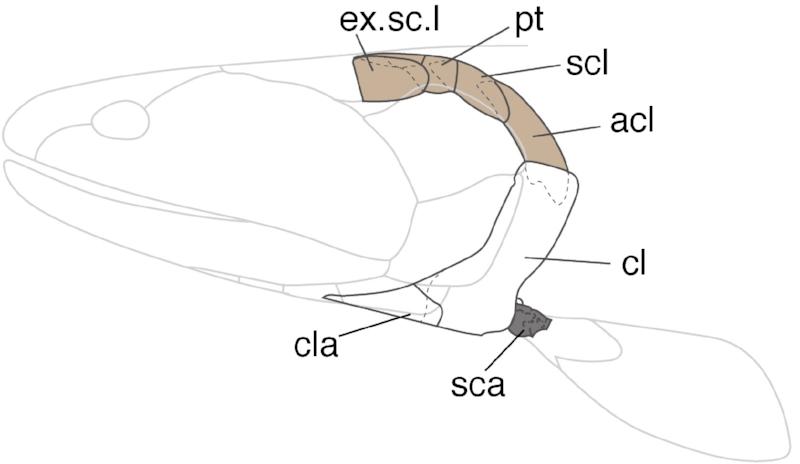 Figure2_TW copy.jpg