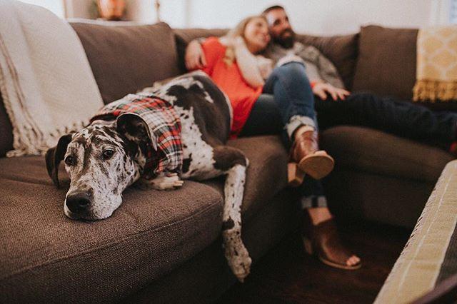 Dog Dayz ➕ #memphisfamilyphotographer #lifestylephotographer #nashvillefamilyphotographer