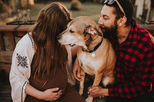 Dogs are family too 💕 • • • • • #nashvillephotographer #nashvillefamilyphotographer #lifestylesessions #maternity #nashvillematernityphotographer