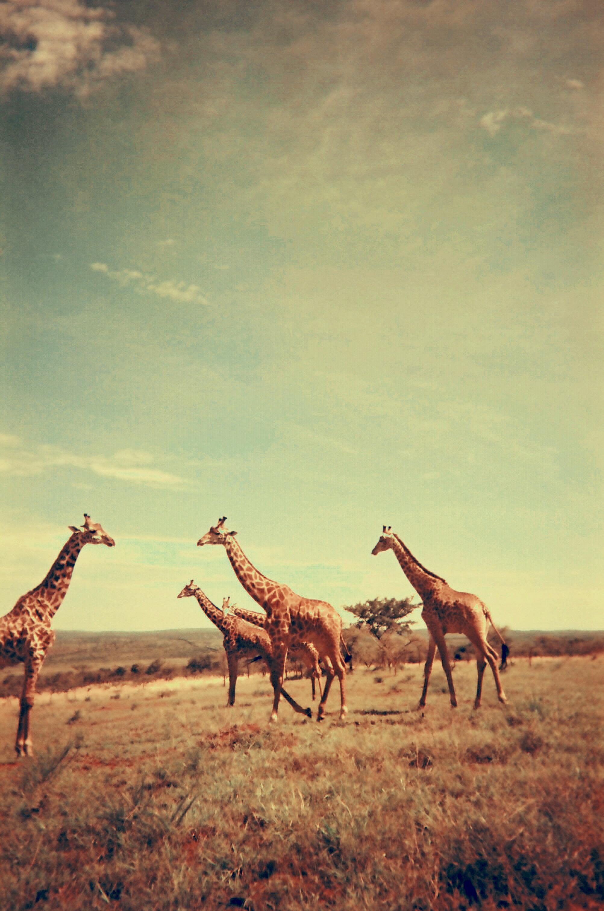 Akagera National Park.JPG