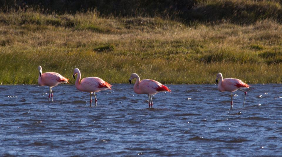Flamingo1sm_edited-2.jpg