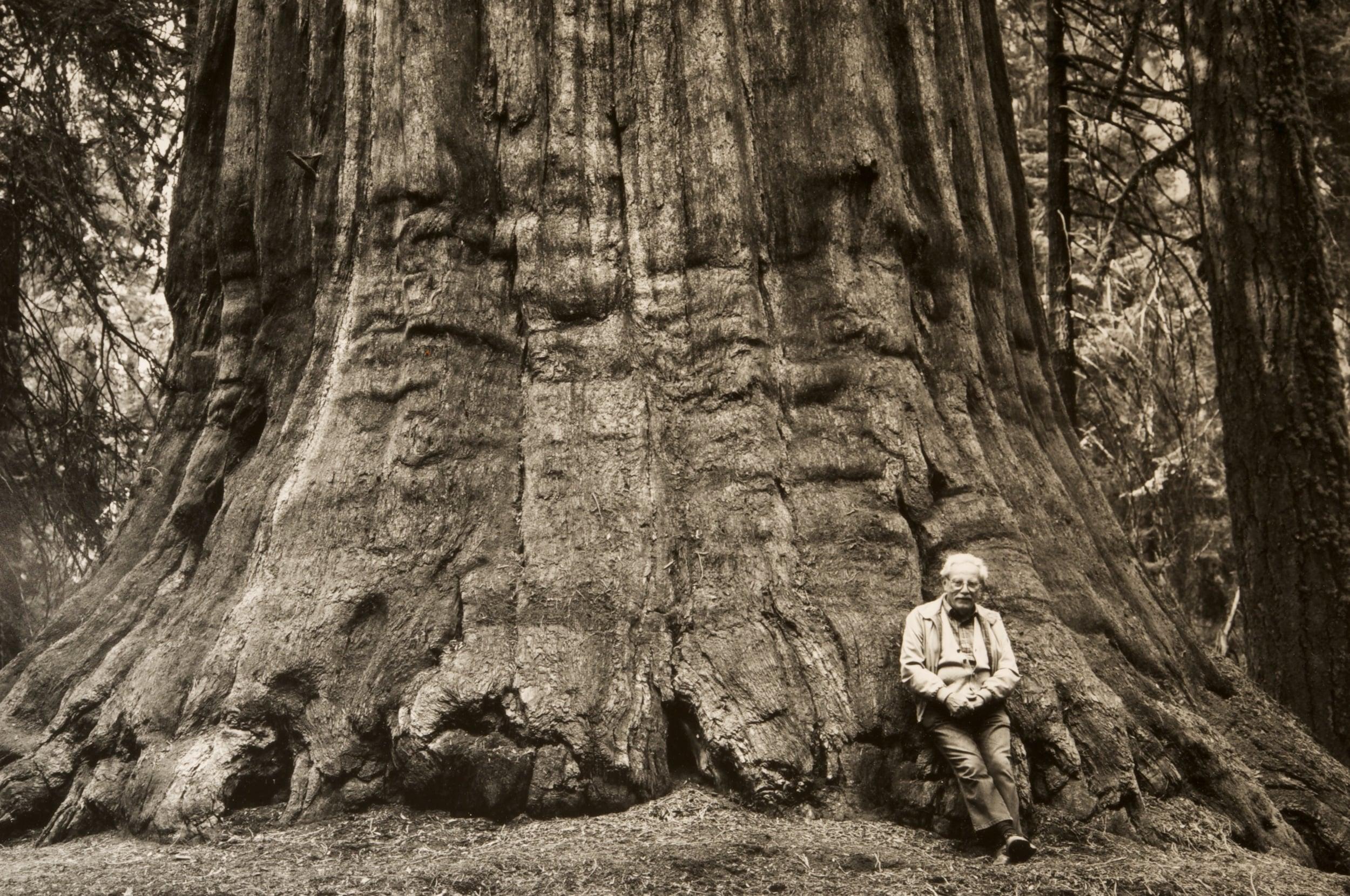Stan Jorstad with Grizzly Giant. Photograph by Steve Jorstad.