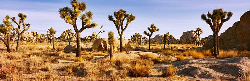 Joshua Tree National Park, Biosphere Reserve, California