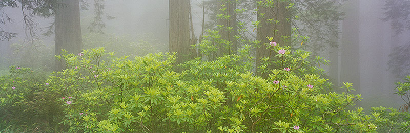 Redwood National and State Parks, World Heritage Site, Biosphere Reserve, California