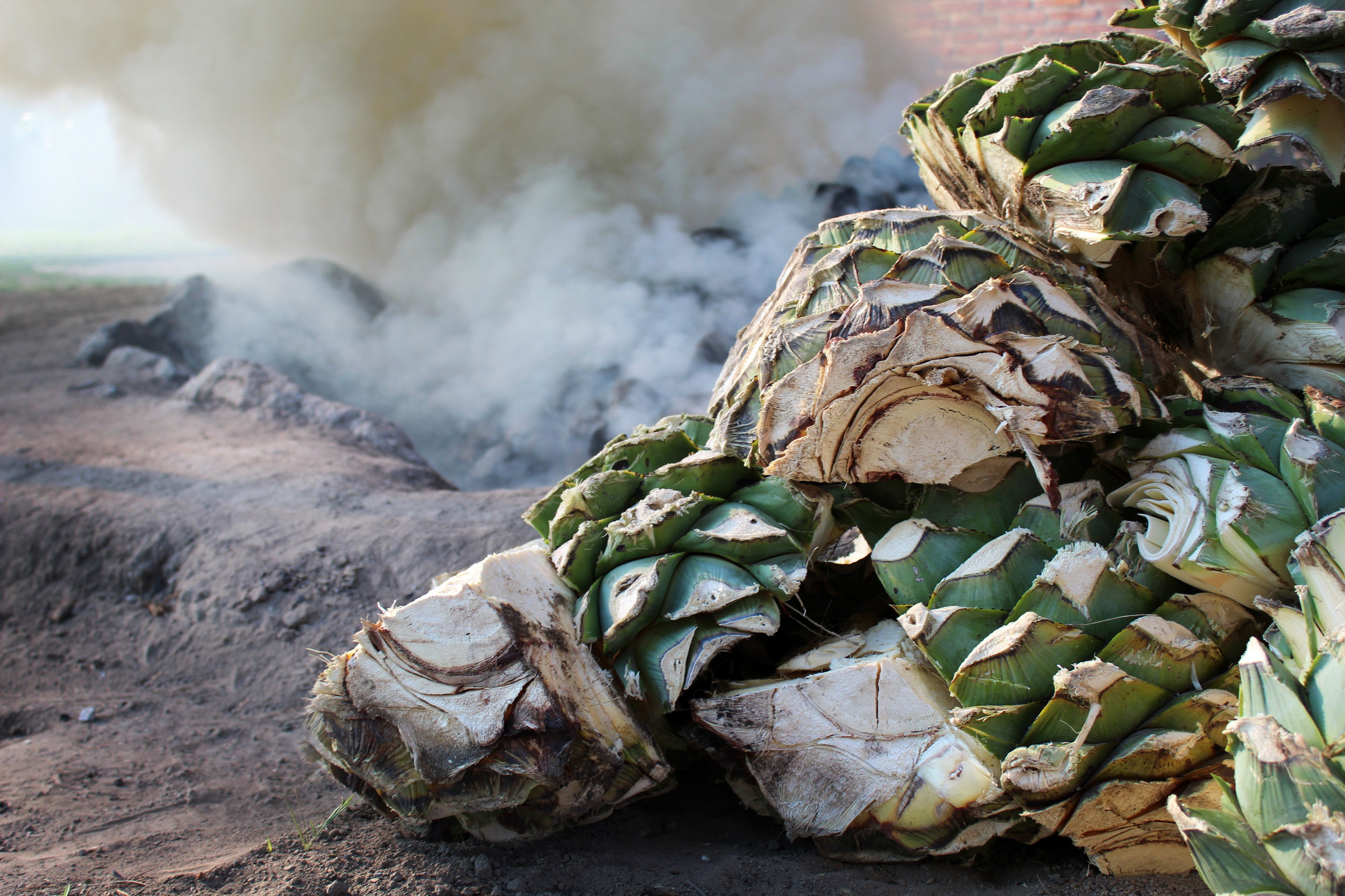 Making mezcal agave espadin horno oven smoke.jpg