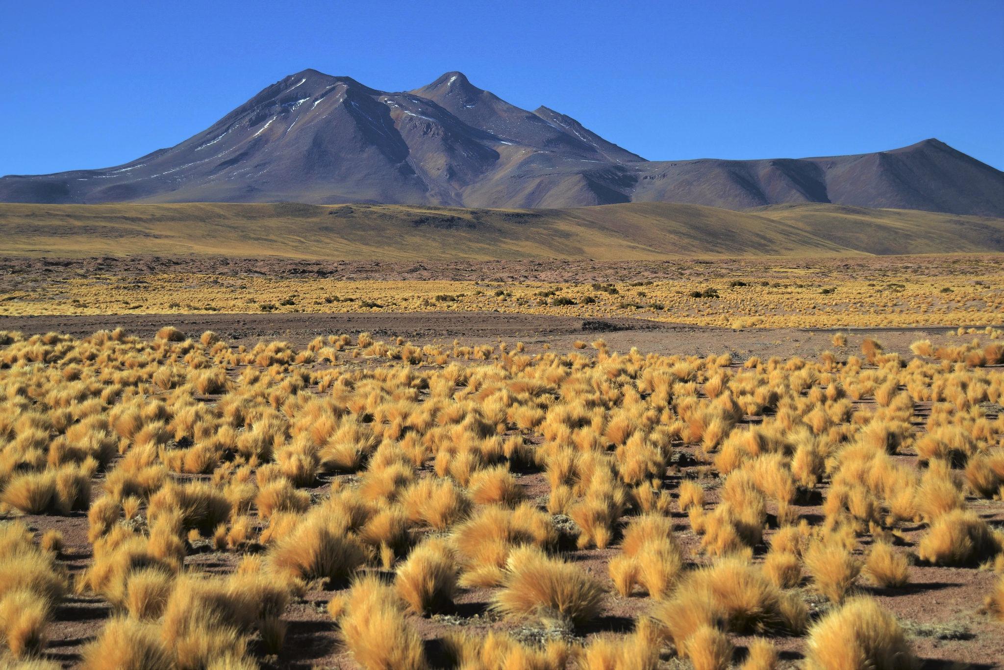 The Altiplano, Chile