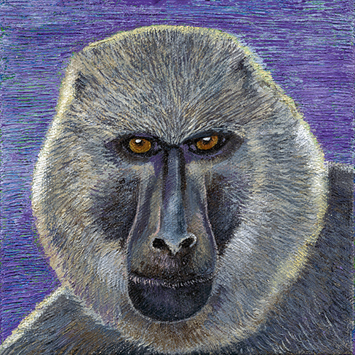 Baboon - SOLD
