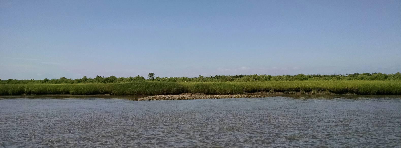 oyster banks.jpg