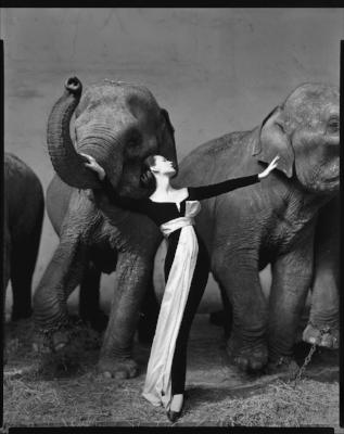 Dovima with elephants, The Richard Avedon Foundation