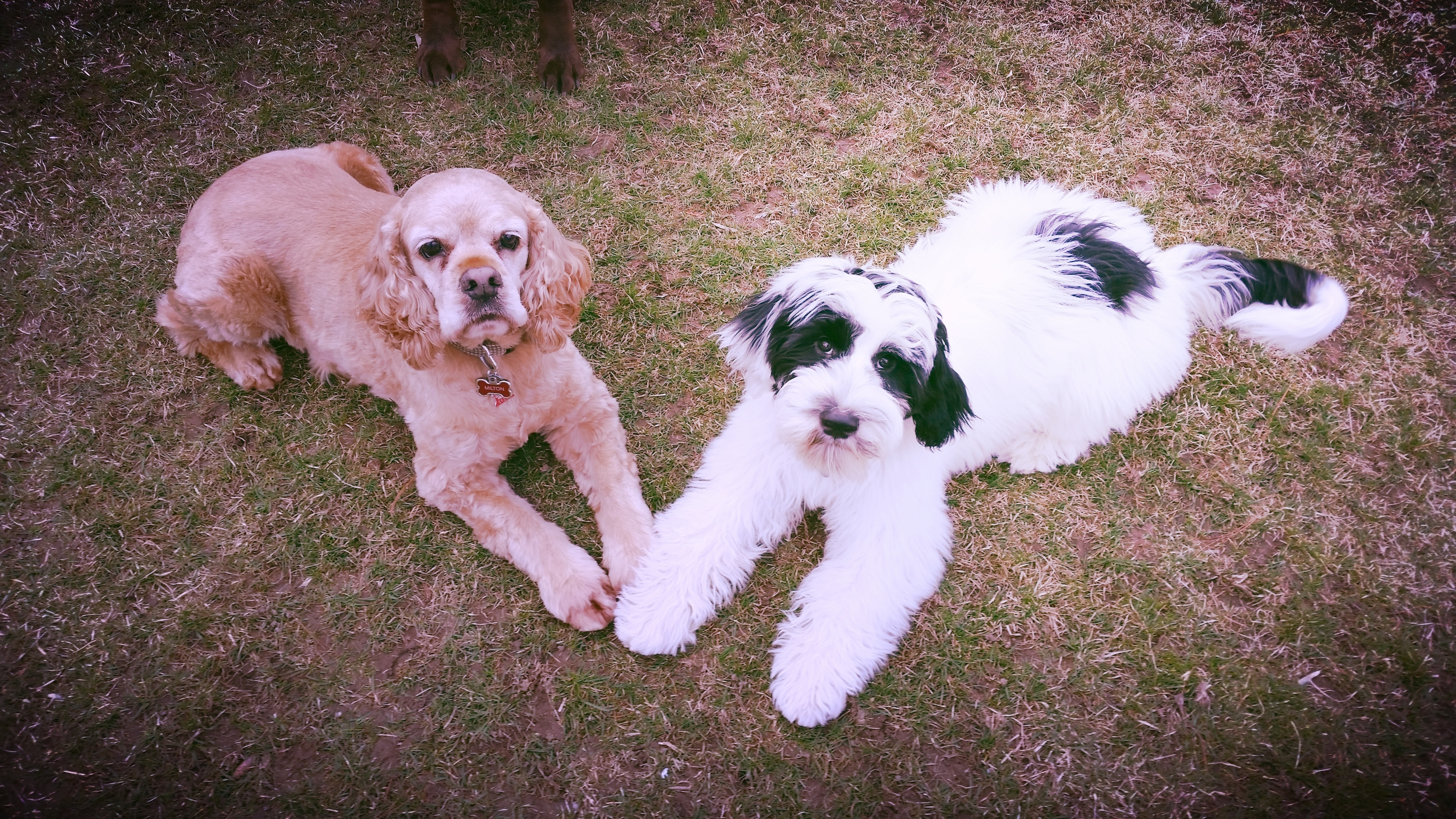 professional pet care services - boarding    Learn More