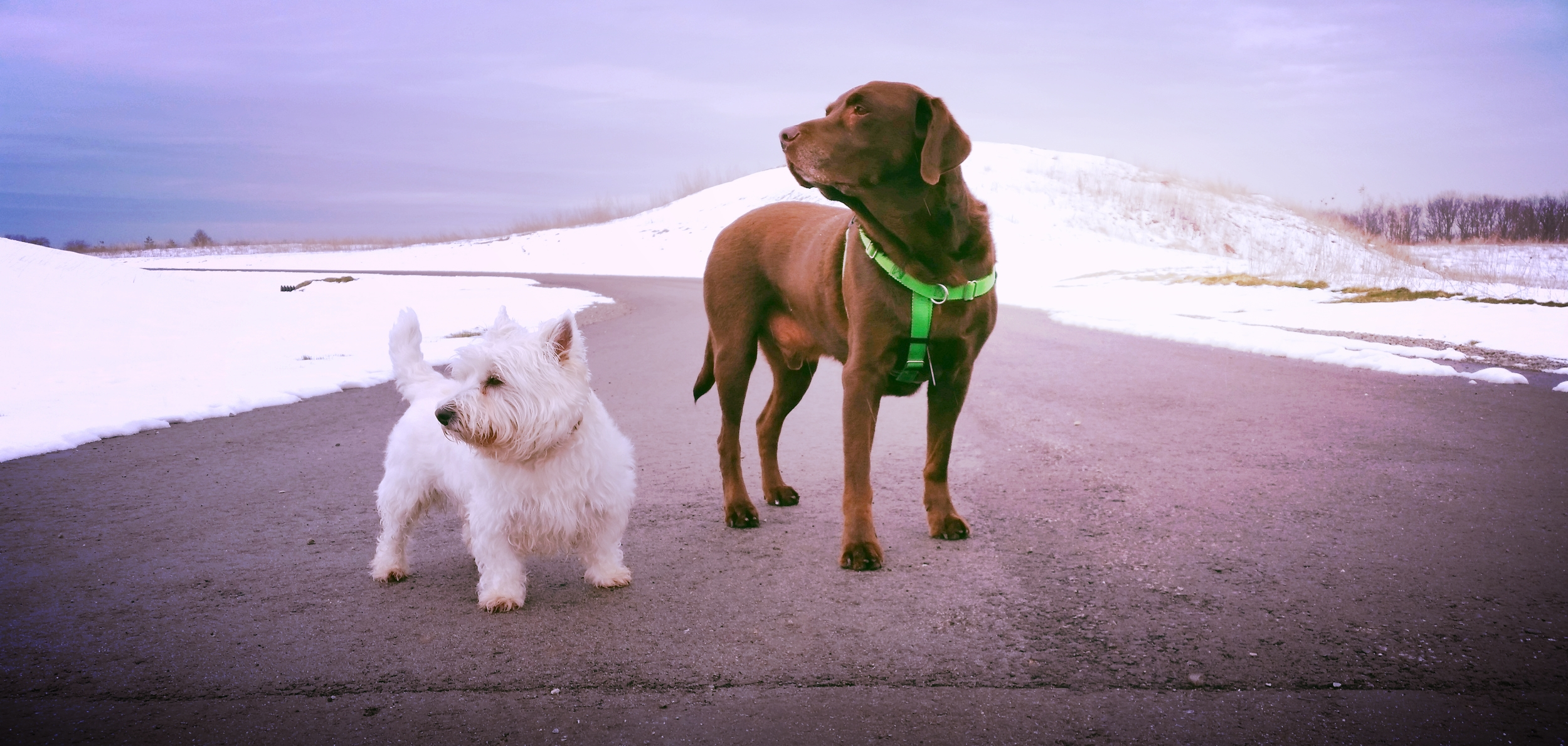 professional pet care services - walking    Learn More