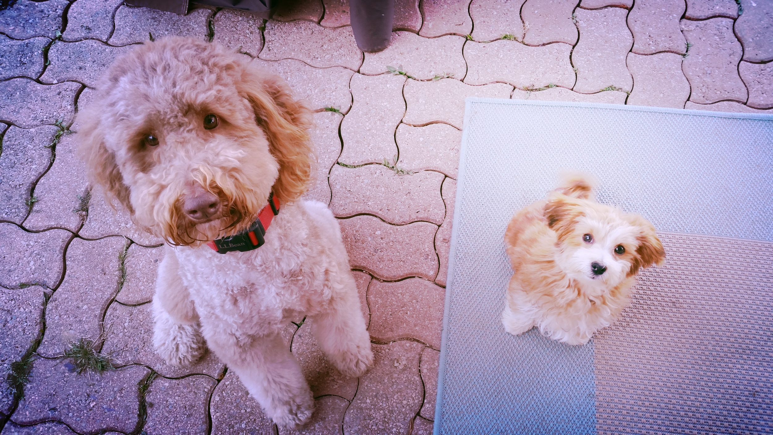 professional pet care services - training    Learn More