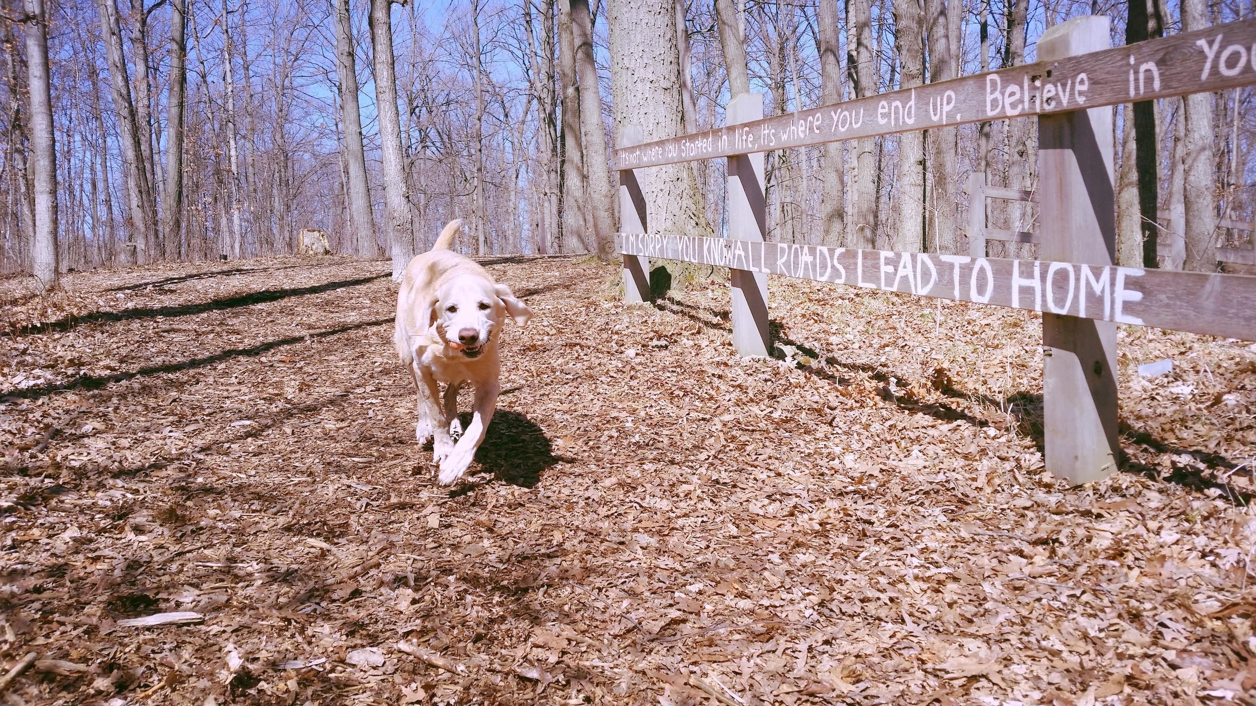 professional pet care services - chau-furr    Learn More