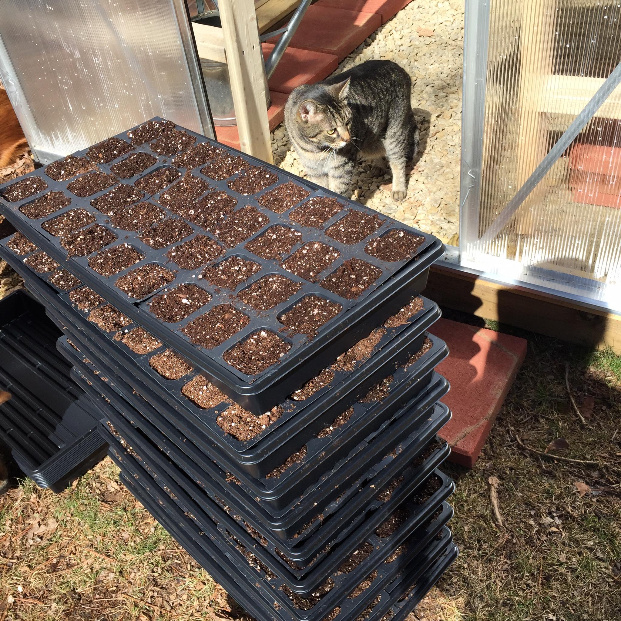 Norman the cat: greenhouse overseer