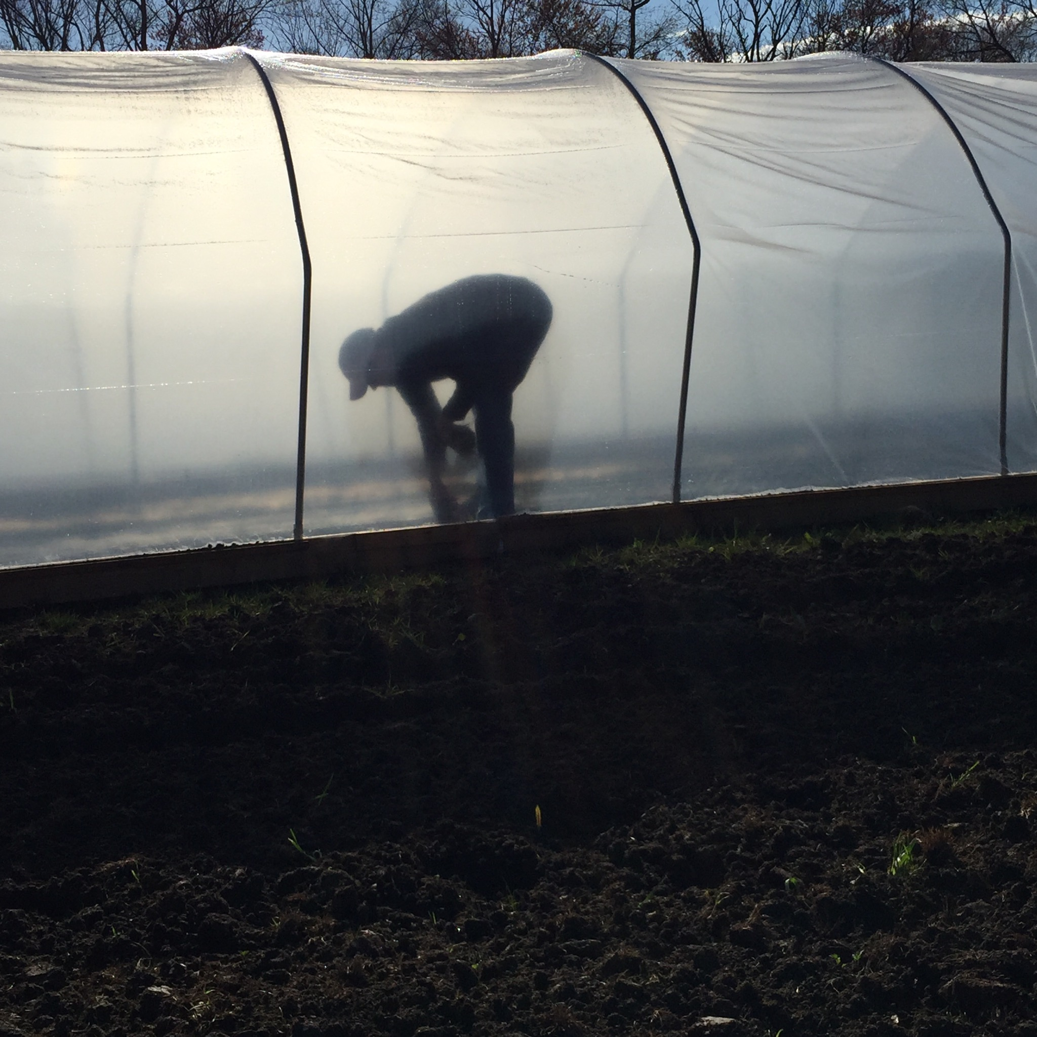 The hubby doing some weeding