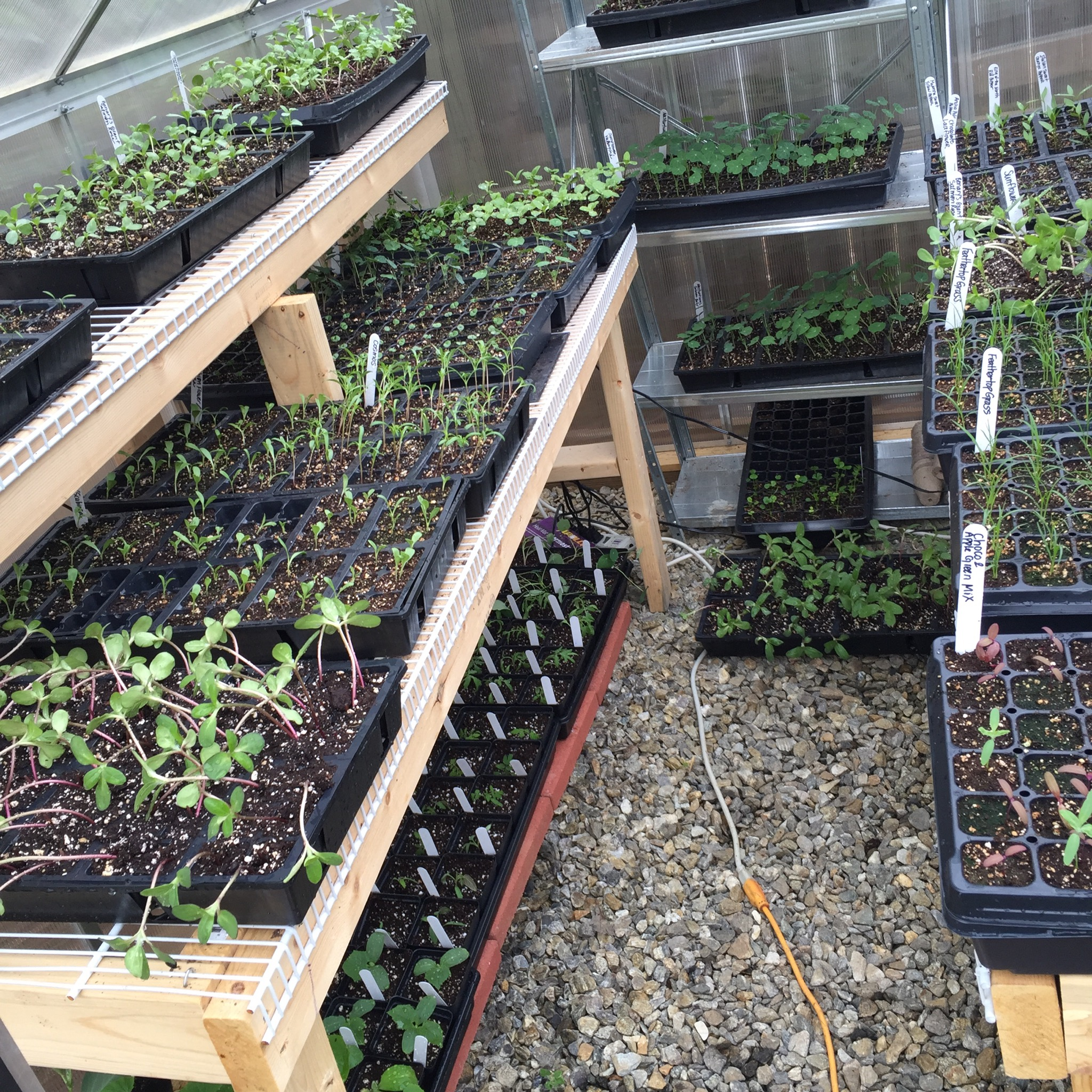 Ridiculously full mini-greenhouse