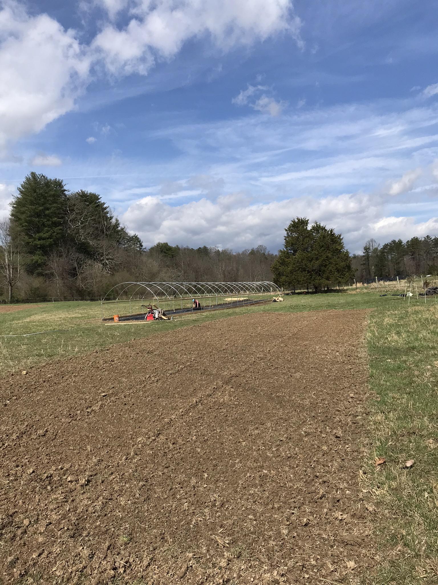 Fields Taking Shape