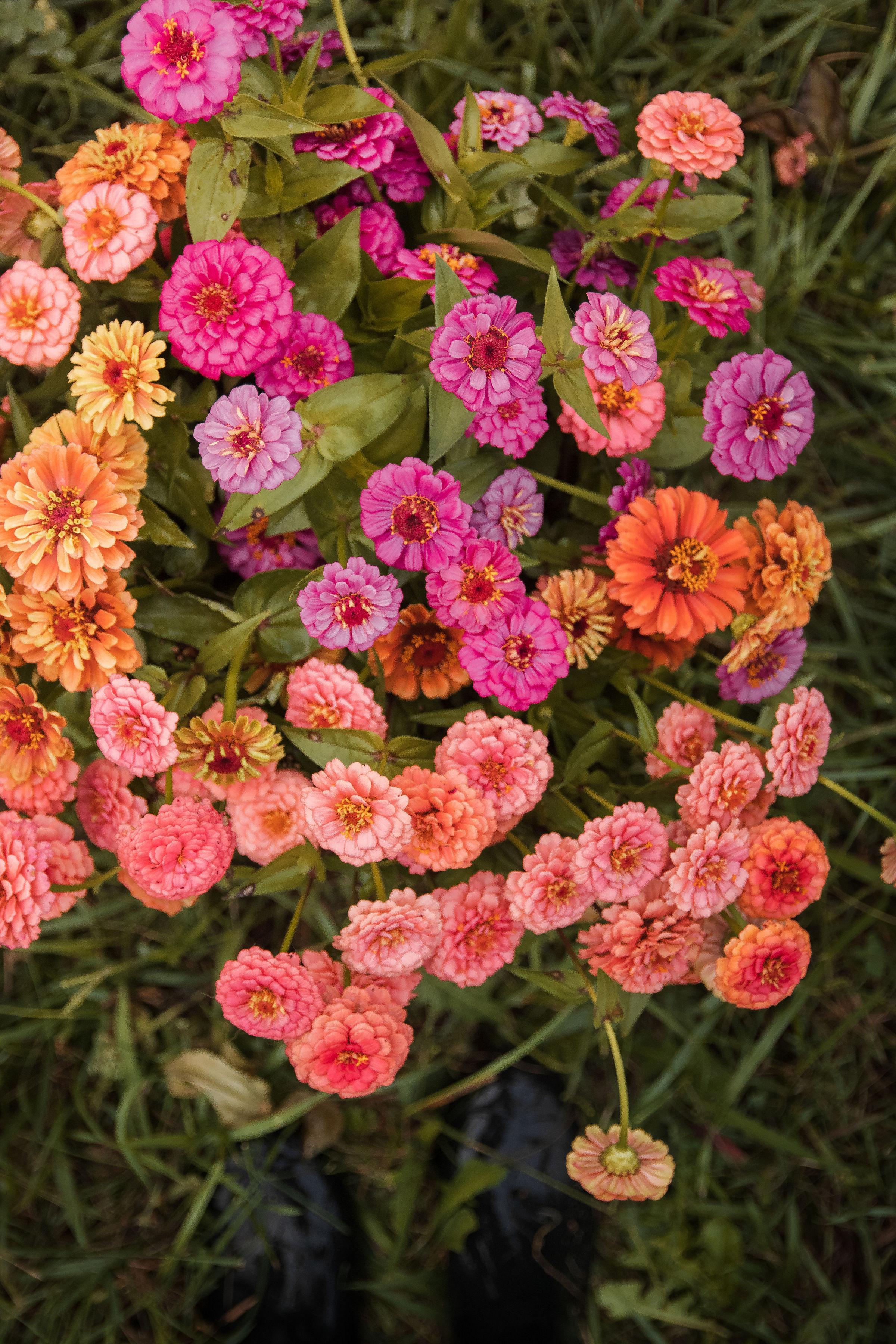 Florals-86.jpg