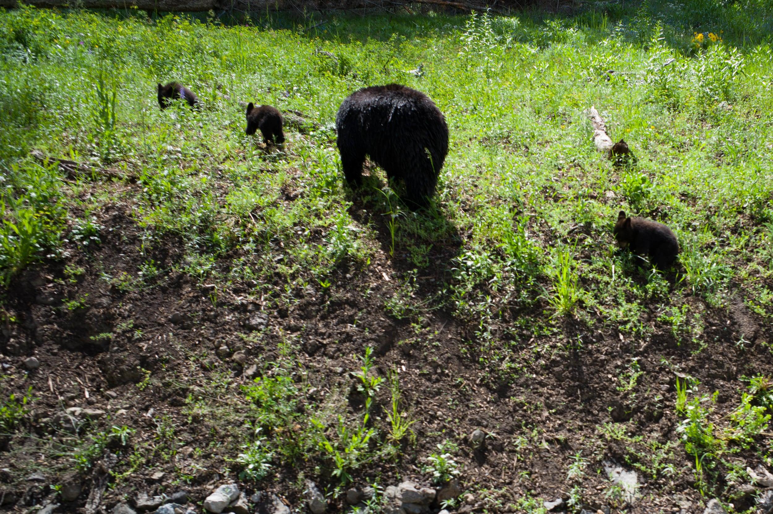Goodbye Bears