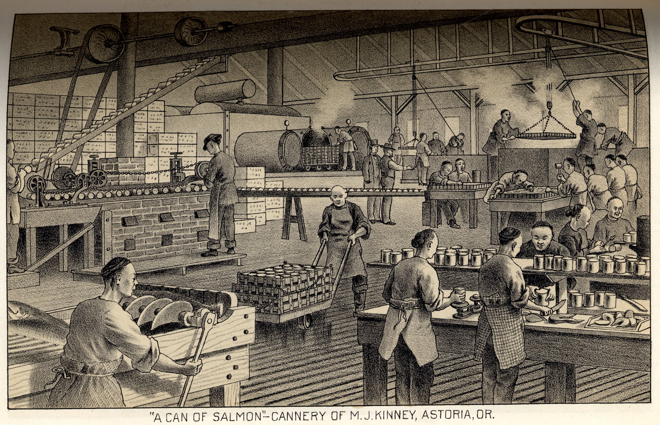 Chinese cannery workers labor inside a cannery in Astoria. This exceptional image shows much of the salmon canning process. From butchering fish with a gang knife, to filling and weighing cans, to soldering filled cans and venting them before sealing them again, until the cans are placed in retorts and finally submerged in water to test for any bubbles.   West Shore , June 1887.